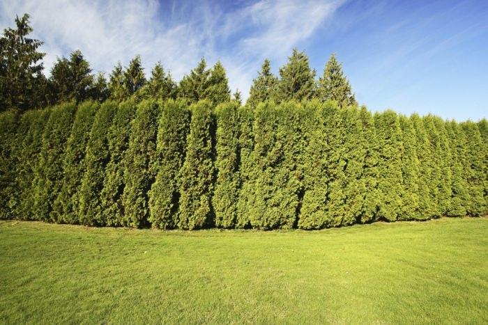 Easy jard n for Arboles altos para jardin