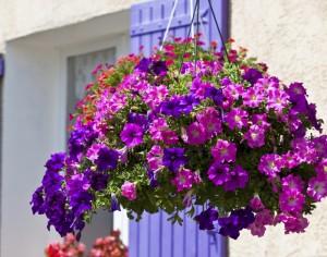 Easy jard n - Plantas de balcon resistentes al sol ...