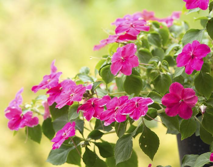 Easy jard n for Plantas en macetas para exterior fotos