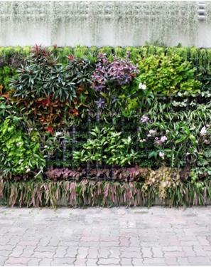 Easy jard n for Plantas para muros verdes verticales