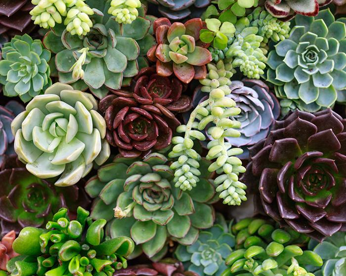 Easy jard n - Como hacer un jardin vertical paso a paso ...