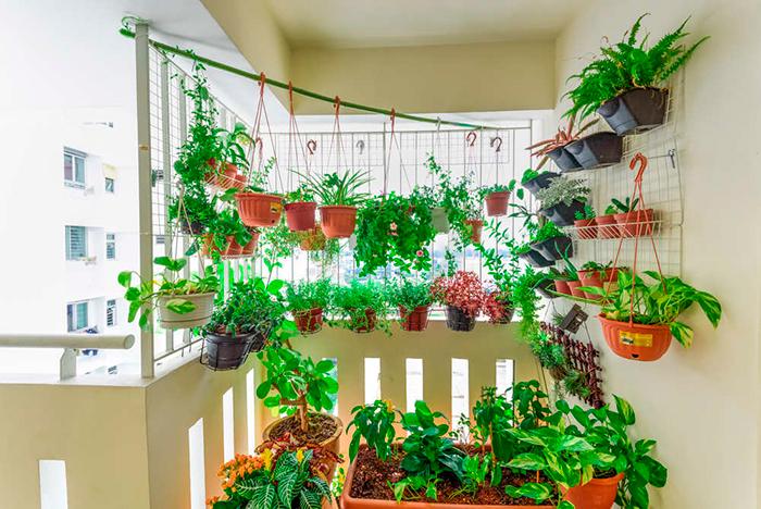 Decoracion de interiores con plantas colgantes - Decoracion de plantas ...