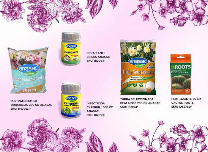 SKU_schlumbergera_productos_interiores_imagenes-easy_jardin