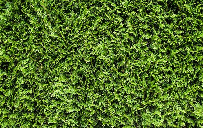 interiores_imagenes-easy_jardin_2