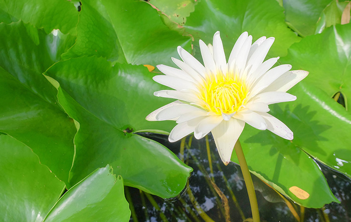 Easy jard n for Fertilizacion de estanques piscicolas