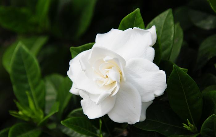 interiores_imagenes-easy_gardenias_