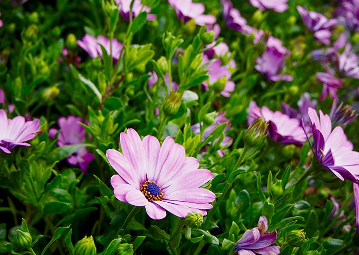 Plantas que aguanten mucho sol trendy rosales with - Plantas que aguantan mucho sol y calor ...
